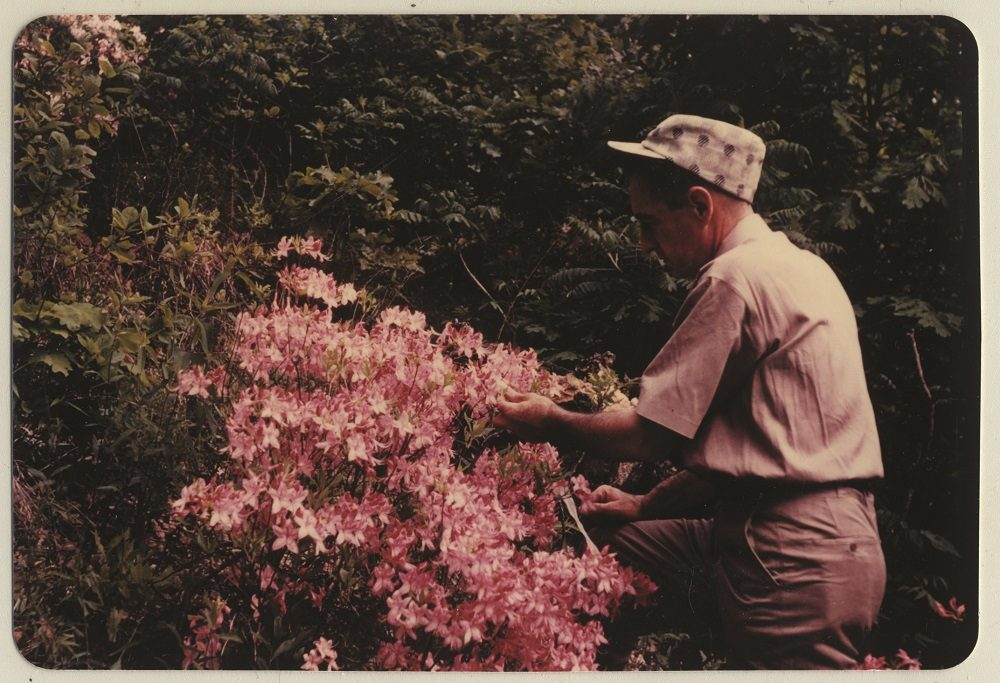 Dr. Neil Compton tends to a flowering bush