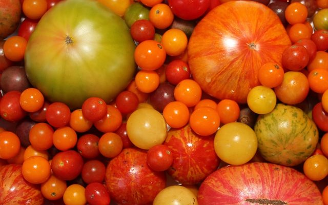 variety of tomatoes in greens, yellows, oranges, and reds