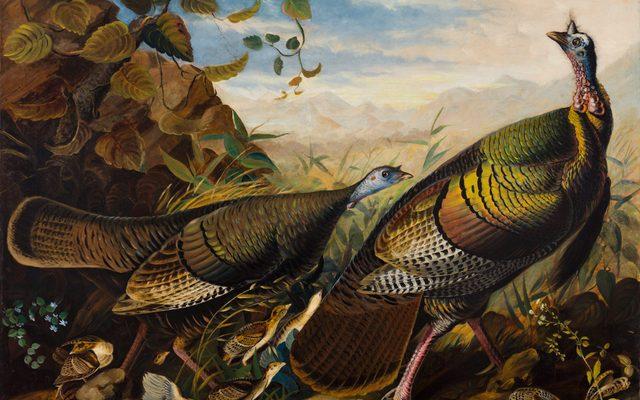 John James Audubon, Wild Turkey Cock, Hen and Young