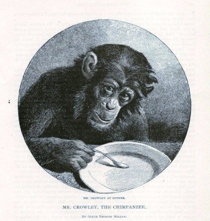 Mr. Crowley, the Chimpanzee: Mr. Crowley at Dinner, by Olive Thorne Miller