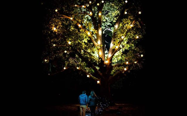 Tree light at night with couple holding hands standing under it