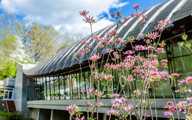Glass building with pink flowers in the foreground
