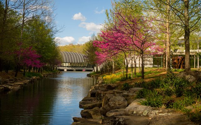Bloomed, tree lined creek way leading to glass building