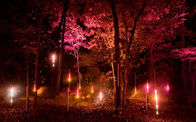 Trees at night illuminated with colored lights
