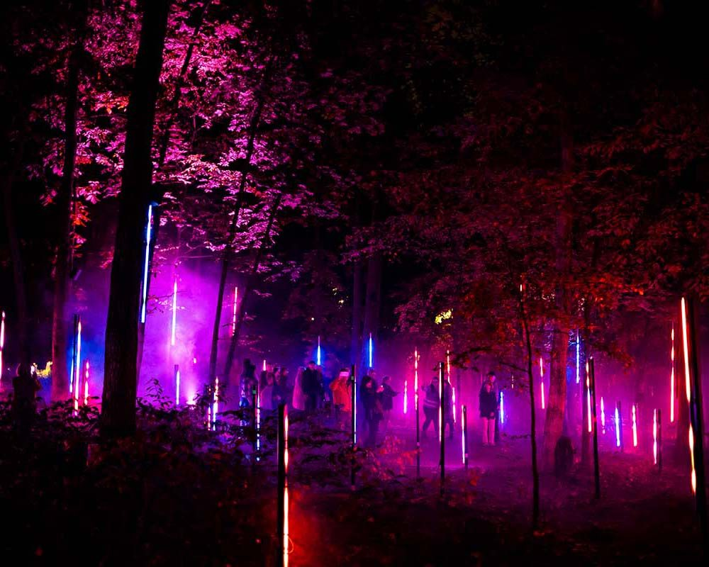 Colored lights in a forest at night