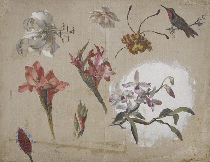 Martin Johnson Heade, Study of Varied Flowers with a Hummingbird