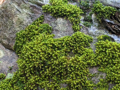 green moss covering rock