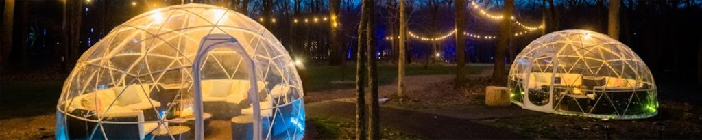 Forest globes with lights