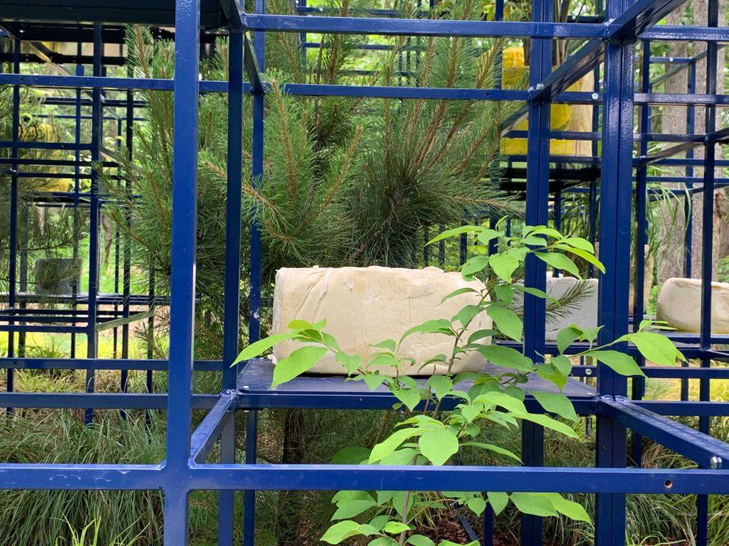 Spicebush and Loblolly Pine