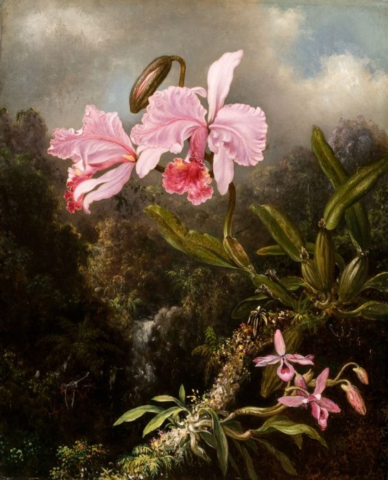 Martin Johnson Heade (1819-1904) Tropical Orchids, 1870-1874 Oil on canvas 21 1/8 x 17 1/8 in. Olana State Historic Site, New York State Office of Parks, Recreation and Historic Preservation; OL.1981.39.A