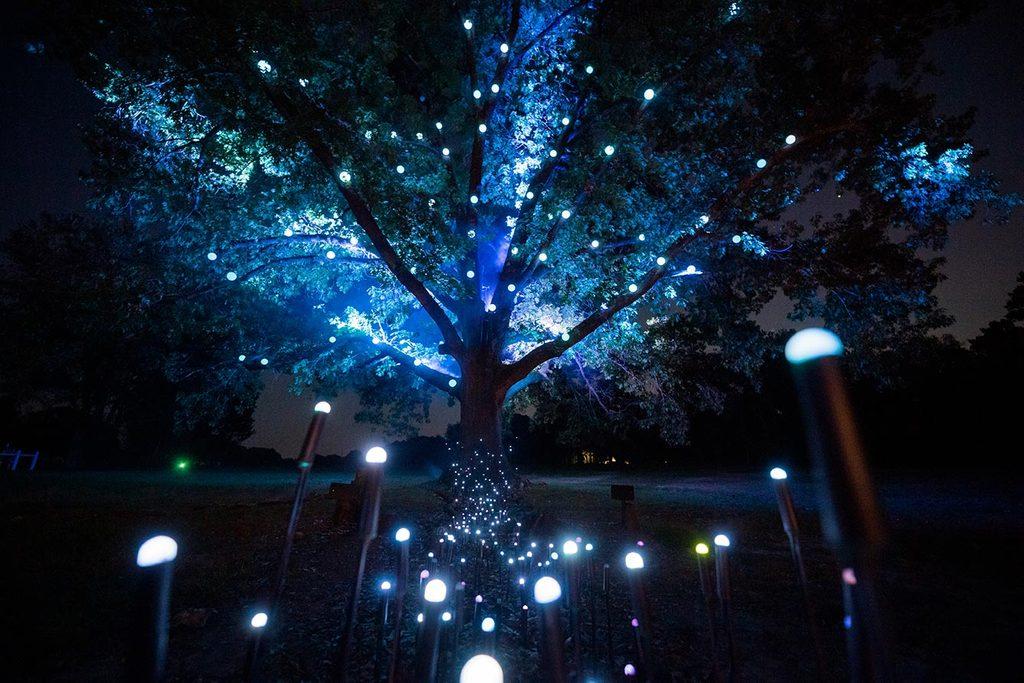 North Forest Lights at Crystal Bridges