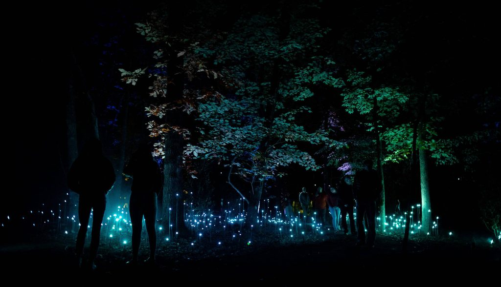 crystal grove in north forest lights